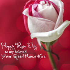 Happy Rose Day name pictures - Rose Day My Beloved